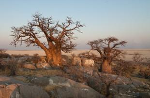 Botswana-Baobabs-Pixabay