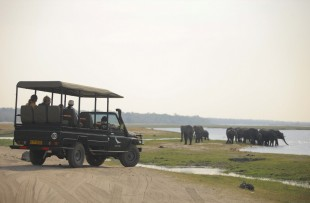 Chobe_under_canvas_gamedrive1