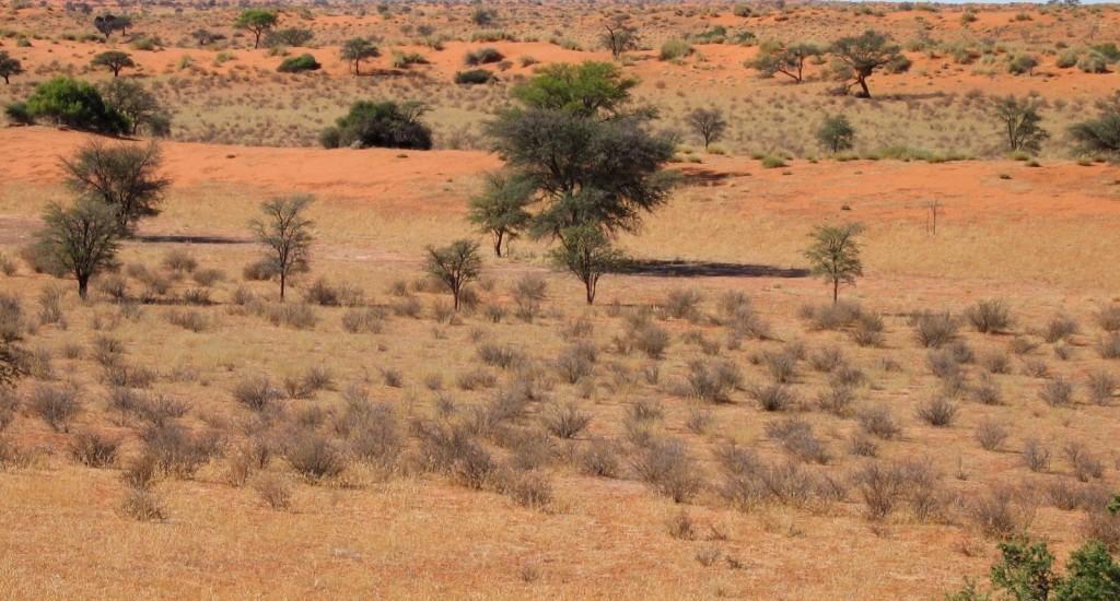 Central Kalahari Game Reserve | ATI Holidays