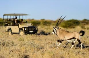 Kalahari-Gane-Drive-Wetu
