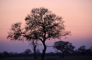 Night-Sky-Africa-Pixaba