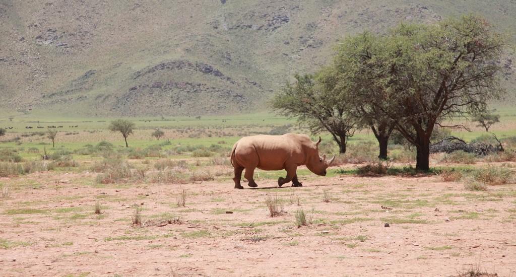 Rhino-Tracking-Botswana