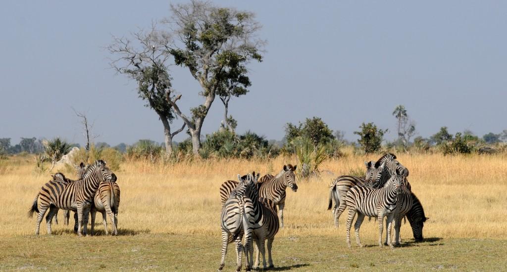 Zebra-Botswana-Pixabay