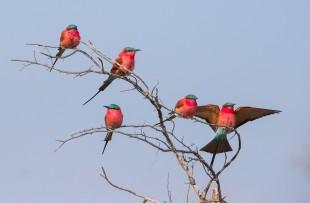 birds-botswana-pixabay