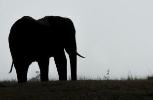elephant-dusk-pixabay