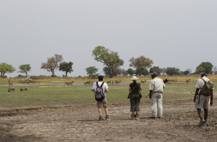 footsteps-across-delta-walking-safari-wetu